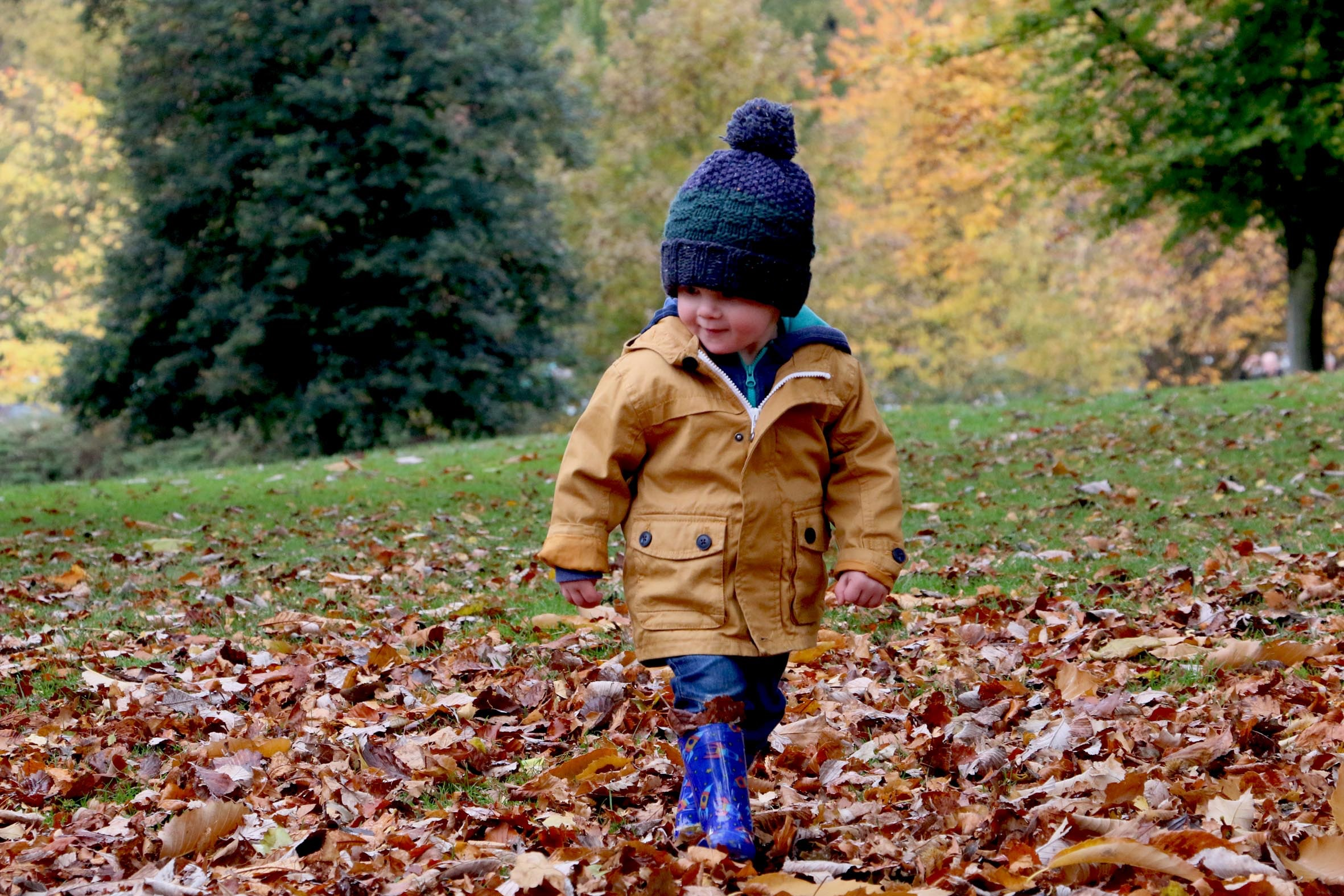 Early Childhood boy in leaves